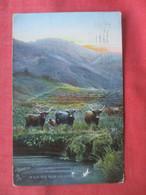 Tuck Series ---Scottish Hills-- In Glen Gyle        Ref 5059 - Non Classés