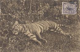 CPA Indonésie Sumatra Tiger - Indonesia