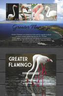 NEVIS, 2021, MNH, BIRDS, FLAMINGOES, GREATER FLAMINGO, SHEETLET+S/SHEET - Flamingo