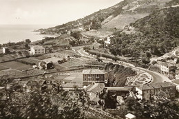 Cartolina - Riviera Dei Fiori - Latte ( Ventimiglia ) - Vista Verso Mortola 1954 - Imperia