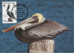 MAXIMUM CARD - MAXICARD - MAXIMU MKARTE- CARTE MAXIMUM - BRITHIS VIRGIN ISLANDS - BROWN PELICAN - Pelicanus Occidentalis - Pelicans
