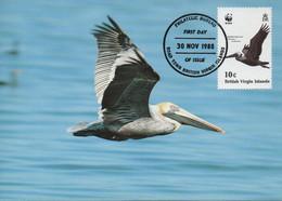 CARTE MAXIMUM - MAXIMUM CARD - MAXIMUM KARTE- MAXIMUM CARD - ILES VIÈRGES BRITANNIQUES - OISEAUX -Pelicanus Occidentalis - Pelicans