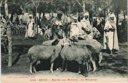CPA AK SETIF Marche Aux Moutons - Le Marquage ALGERIE (1145461) - Setif
