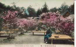 JAPAN-JAPON-KYOTO-CHERRY -BLOSSOM AT OMURO - Kyoto