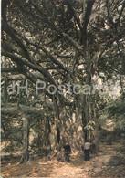 Siracusa - L'Albero Secolare - The Secular Tree - 194 - Italy - Unused - Siracusa