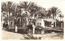 EGYPT Suez Canal The Wells Of Moses Near Suez Les Sources De Moïse - Suez