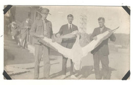 """Postcard Vintage Real Photo, 1940's Unknown Airforce Base  """"Pelican Being Held By Personal"""", Unused , See Description BB - War 1939-45"""