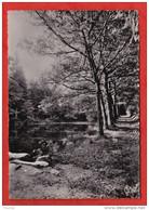 EB25-  87) LA JONCHERE (HAUTE VIENNE) ÉTANG DES PÉPINIÈRES   - (OBLITERATION DE 1960 - 2 SCANS) - Andere Gemeenten