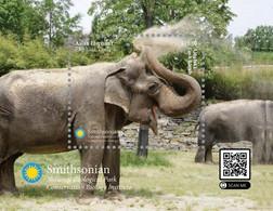 Aitutaki 2021, National Zoologic Park, Elephants, Block - Aitutaki