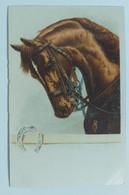 13254 Cartolina Illustrata - Cavallo - Primi '900 - Cavalli