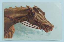 13255 Cartolina Illustrata - Cavallo - Primi '900 - Cavalli