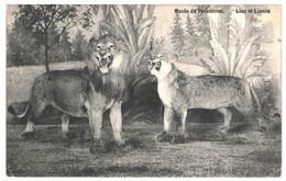 CPSM- Carte Postale Belgique- Momignies  Pensionnat Des Frères Musée Lion Lionne  1911 VM34780i - Chimay