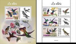 Guinea 2021, Animals, Hummingbirds, 3val In BF +BF - Sperlingsvögel & Singvögel