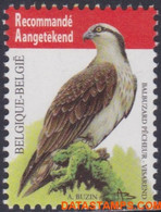België 2011 - Mi:4137, Yv:4071, OBP:4090, Stamp - XX - Birds Osprey - 1985-.. Uccelli (Buzin)