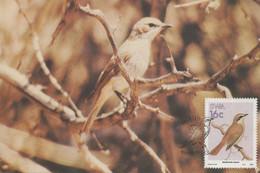 CARTE MAXIMUM - MAXIMUM CARD - MAXIMUM KARTE - CARTOLINA MAXIMA - MAXIMUM CARD - NAMIBIE - OISEAUX - Nabimornis Herero - Sperlingsvögel & Singvögel