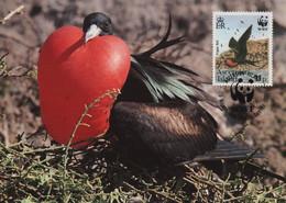 CARTE MAXIMUM - MAXICARD - MAXIMUM KARTE - CARTOLINA MAXIMA -MAXIMUM CARD - ASCENSON (ILE D') - FRÉGATE - Fregata Aquila - Sperlingsvögel & Singvögel