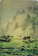CPSM Ours Brun En Vallée D'Aspe     L774 - Bears