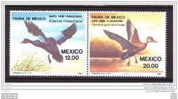 Mexique, Mexico, Canard, Oiseau, Duck, Bird - Patos