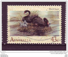 Australie, Australia, Cygne, Oiseau, Swan, Nid, Neast - Swans