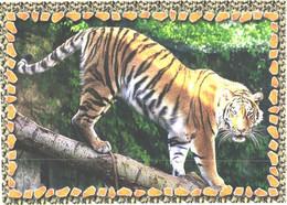 Walking Tiger On Tree - Tigers