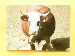 V11-A-38-isere-lot De Deux Cartes --amour De Vache(--je Marrone..et Vous-) - Sin Clasificación