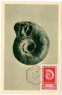 ALGERIE  1952 = TAMANRASSET = CACHET HEXAGONAL  ' COQUILLAGE Fossile Berbericera Sekikense' Sur N° 297 / CARTE MAXIMUM - Conchiglie