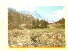 V11-A-38-isere-tapis Floraux Dans La Vallee De La Claree--obliteration Grenoble - Sin Clasificación