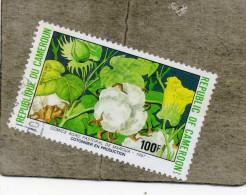 CAMEROUN : Champ  De Coton En Production - Famille Des Malvacées - Gossypium Sp. - Agriculture - Textile - - Camerun (1960-...)