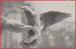 """Ramier De Ville. Pigeon. Image Prisma. Image N°92. Album N°8: """"Les Bêtes De Chez Nous"""". Chocolat Cémoi. Grenoble - Otros"""