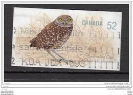 Canada, Hibou, Owl, Rapace, Oiseau, Bird - Owls