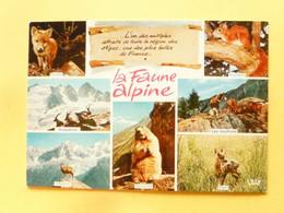 V11-A-38--la Faune Alpine-7-vues--renard-bouquetins-chamois-marmotte Faon-mouflons-ecureuil- - Sin Clasificación