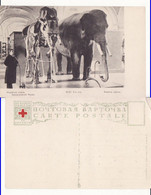 Russia,Russie- Types- Croix Rouge,Red Cross-Elephant-museum - Rusland