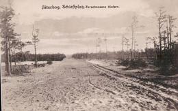 Jüterbog Schießplatz. Zerschossene Kiefern. - Jueterbog