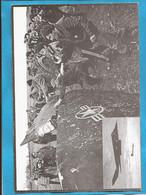 STOP- THE BOMBS KOSOVO SERBIA NATO  AEREI KOSOVSKA MITROVICA POSTAL CARD INTERESSANT - Kosovo