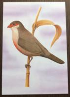 Sao Tomé E Principe: Intero, Stationery, Entier, Estrilda Astrild Angolensis - Sparrows