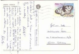 1996 £750 FARFALLA MELANARGIA ARGE SU CARTOLINA ASSISI NORCIA SPOLETO GUBBIO - 1991-00: Marcophilie