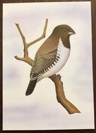 Sao Tomé E Principe: Intero, Stationery, Entier, Spermestes Cucullatus - Sparrows