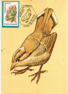 Brachyptérolle écaillé & Aigrette Garzette. CARTE-MAXIMUM Pro Natura (deux Photos Recto-verso) - Sperlingsvögel & Singvögel
