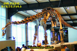 Carte Postale, Animaux Prehistoriques, Jurassic Dinosaurs, Kaatedocus Siberi - Andere