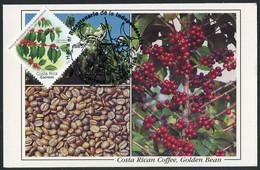 COSTA RICA (2021) Hacia Bicentenario Independencia - Café Arabica, Coffea Arabica, Coffee, Kaffee - Maximum Card - Costa Rica