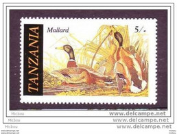 Tanzanie, Canard Mallard, Oiseau, Oiseaux, Bird, Birds, Duck - Patos