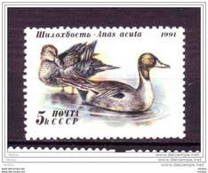 Russie, Russia, Canard, Duck, Oiseau, Bird - Patos