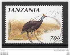 ##1-1, Tanzanie, Tanzania, Dinde, Turkey, Oiseau, Bird - Hühnervögel & Fasanen