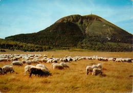 CPSM Puy De Dôme-Moutons     L787 - Non Classificati