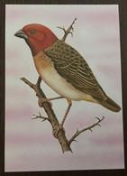 Sao Tomé E Principe: Intero, Stationery, Entier, Quelea Erythrops - Sparrows