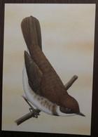Sao Tomé E Principe: Intero, Stationery, Entier, Horizorhinus Dohrni - Sparrows