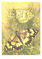 L.Aristov:Butterfly, Melanargia Larissa Hbn., 1981 - Butterflies