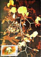► Orchidée Du Guatemala - ONCIDIUM SPLENDIDUM  - Carte Maximum Card Posta Romana 1990 - Orchids