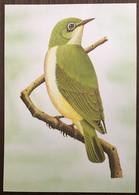 Sao Tomé E Principe: Intero, Stationery, Entier, Zosterops Ficedulinus - Cuckoos & Turacos