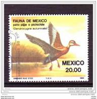 Mexique, Oiseau, Oiseaux, Canard, Bird, Birds, Duck - Patos